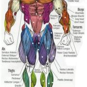OPINION: Muscle Diagrams At The Plex Set Unrealistic Standards For BC's Muscled Hunks