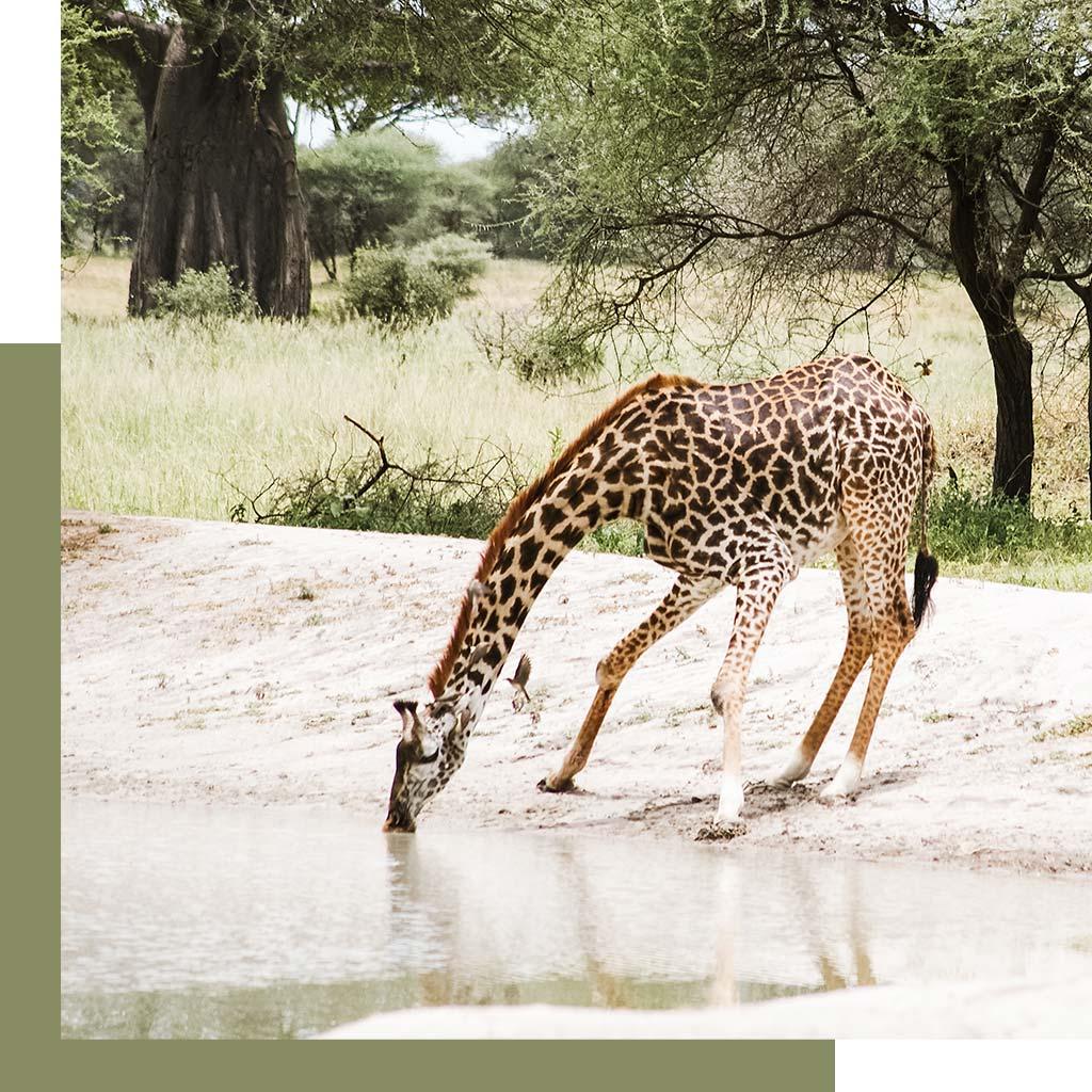 Afrika reizen