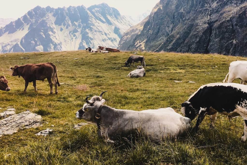 Hiken in Zwitserland en tips voor Zürich
