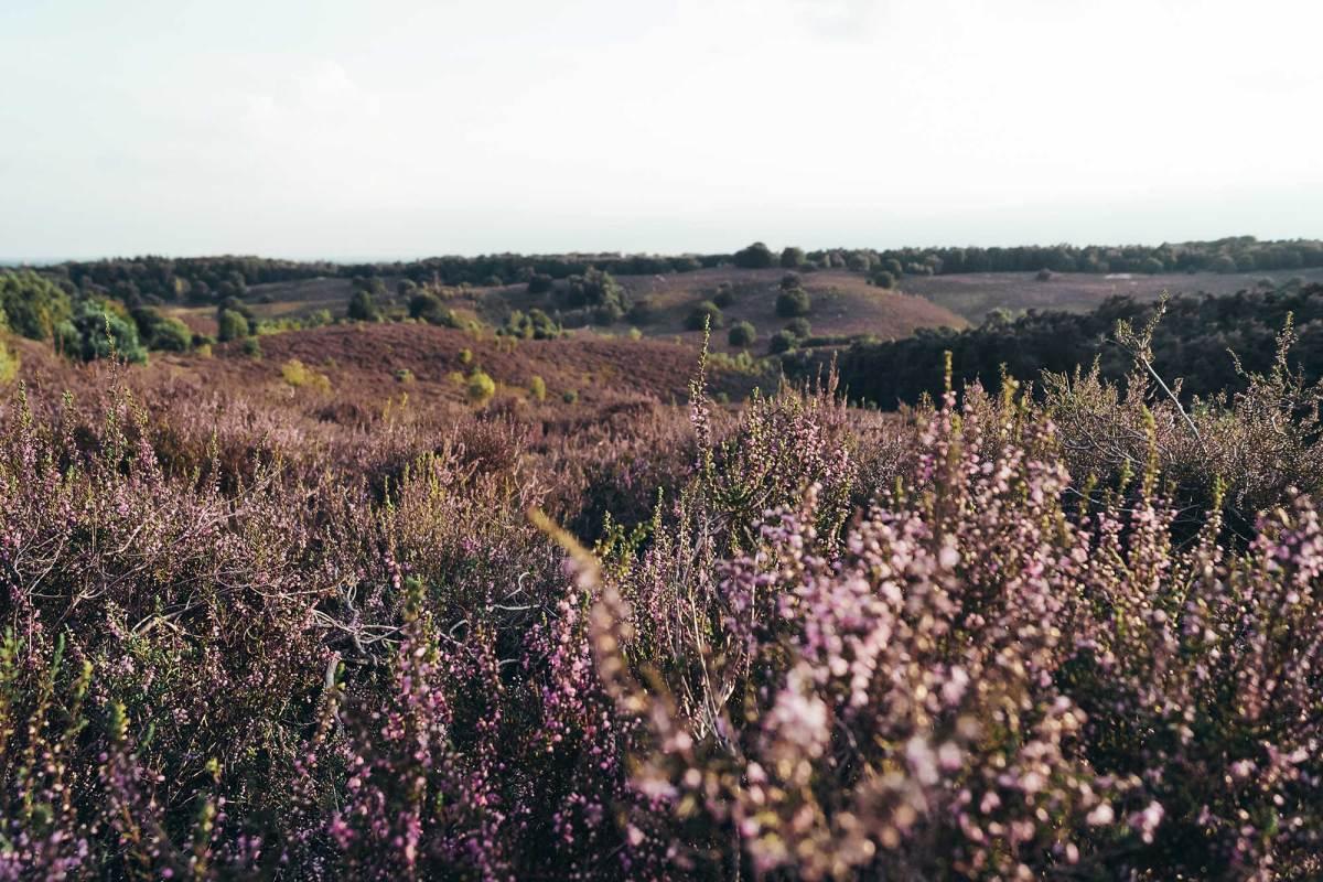 Natuur Veluwezoom-Posbank Rheden