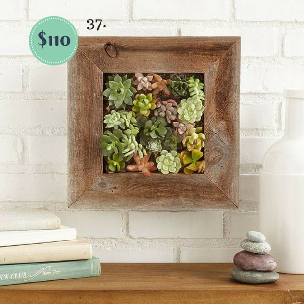 Living Succulent Wall Hanging on The Newport Bride's Holiday Gift Guide