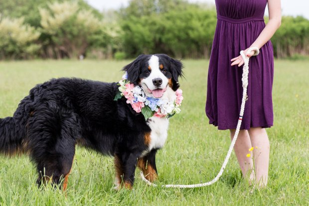 5 Easy Ways to Dress Your Dog For Your Wedding on The Newport Bride