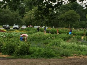Shareholders Roam the Flowerbeds with Scissors, Working to Create the Perfect Bundle. Photo Courtesy Shelagh Dolan.