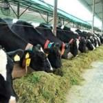 डेयरी किसानों को सरकार का तोहफा, अब कम देना पड़ेगा ब्याज