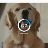 personalized subaru thank you video dogs