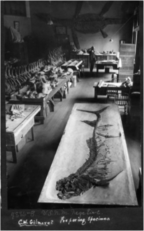Sold To U.S. National Museum, March 1926. The fossil was purchased with National Sesquicentennial Exposition Fund to celebrate 150th anniversary signing Declaration of Independence. (University Archives, Fort Hays State University, Hays, KS)