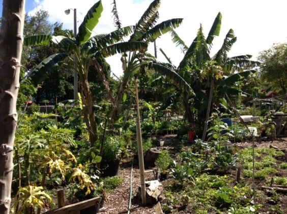 A community garden in Little Haiti. (Courtesy of The Awesome Foundation)