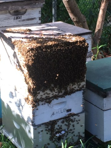 A beehive at Gentzel's apiary. (Courtesy of J & P Apiary)