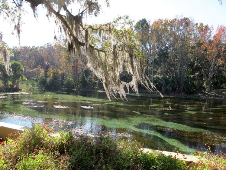 Ocala National Forest. (Courtesy of Kristine Paulus/Flickr Creative Commons)