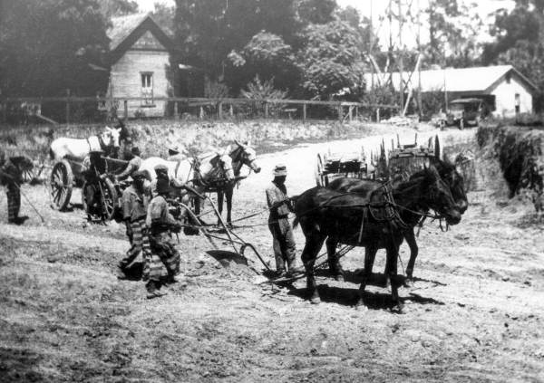 Road-building by a chain gang in 1925. (Courtesy of State Archives of Florida, Florida Memory.)
