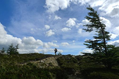 Windblow tree and tiny figure in Patagonia