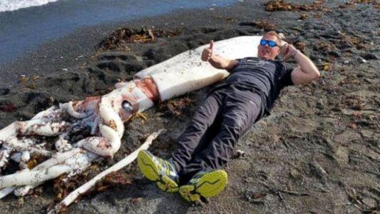 giant-squid-new-zealand