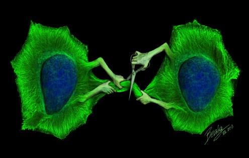 Cytokinetic abscission
