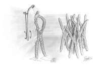 Before chromosomes can be segregated during cell division, they have to cover themselves with a protein that acts similar to soap to prevent them from sticking together. This drawing is part of a press release for a recent discovery of a protein that acts as a surfactant to disperse chromosomes during anaphase.