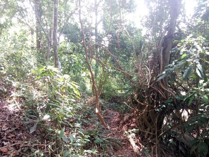 Jungle trail to main road