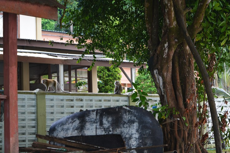 A family of monkeys guarding the Centre for Marine and Coastal Studies @ Penang National Park, Malaysia