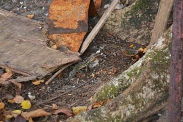 A Dinosaur @ Penang National Park, Malaysia