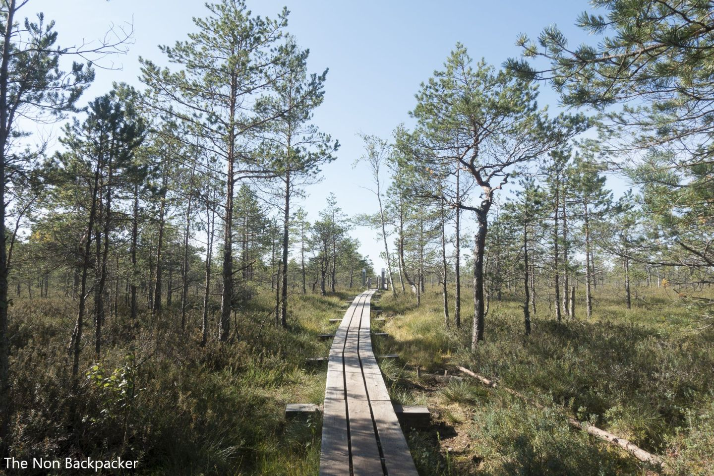 Path to the Latvian countryside