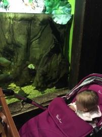 took a trip to Lakeside and the aquarium.