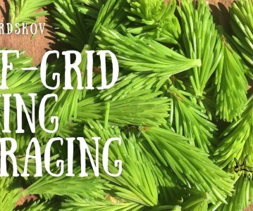 Off Grid Living | Foraging