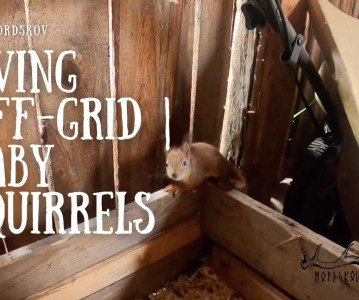 Living off-grid | Baby squirrels