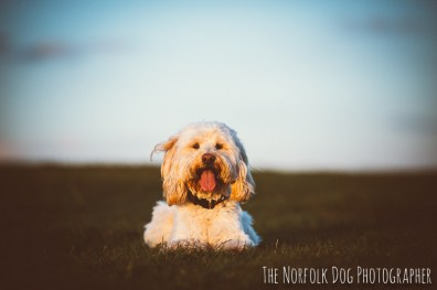 The-Norfolk-Dog-Photographer-0003