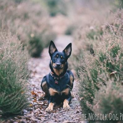 The-Norfolk-Dog-Photographer-0004