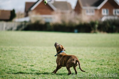 The-Norfolk-Dog-Photographer-0006