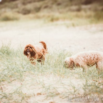 The-Norfolk-Dog-Photographer-0023