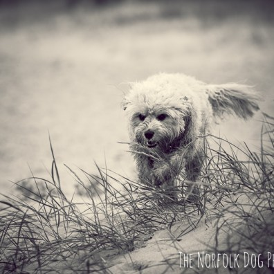 The-Norfolk-Dog-Photographer-0027