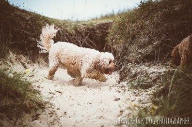 The-Norfolk-Dog-Photographer-0033