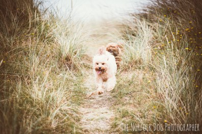 The-Norfolk-Dog-Photographer-0051
