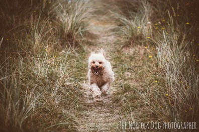 The-Norfolk-Dog-Photographer-0052