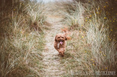 The-Norfolk-Dog-Photographer-0054