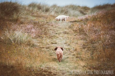 The-Norfolk-Dog-Photographer-0056