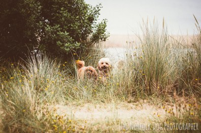The-Norfolk-Dog-Photographer-0061