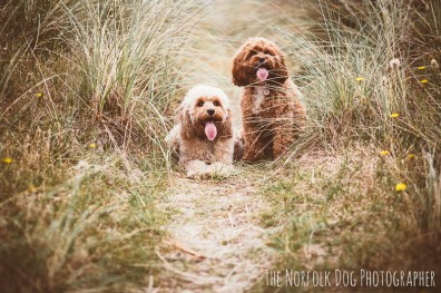 The-Norfolk-Dog-Photographer-0048.2
