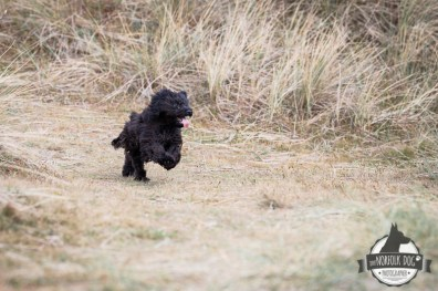 The-Norfolk-Dog-Photographer-0039