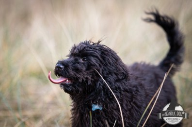 The-Norfolk-Dog-Photographer-0044