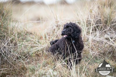The-Norfolk-Dog-Photographer-0050