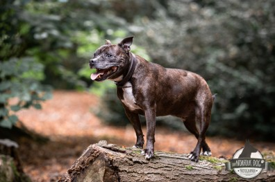The-Norfolk-Dog-Photographer-0034