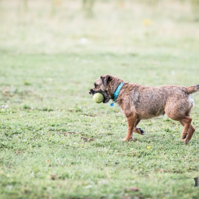 The-Norfolk-Dog-Photographer-0118