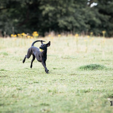 The-Norfolk-Dog-Photographer-0119