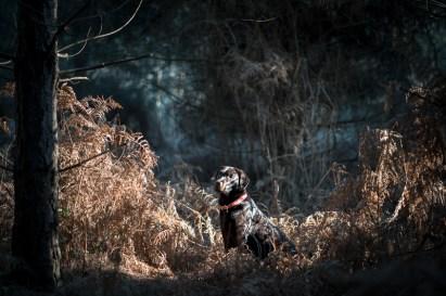 The-Norfolk-Dog-Photographer-0010