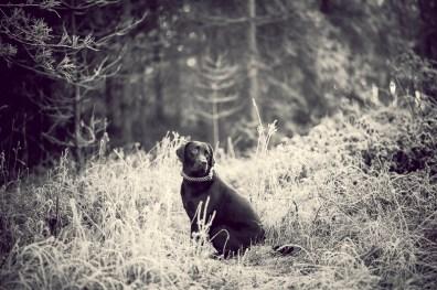The-Norfolk-Dog-Photographer-0018