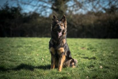 The-Norfolk-Dog-Photographer-0006