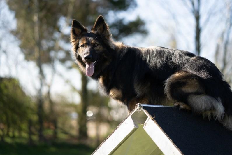 The-Norfolk-Dog-Photographer-0012