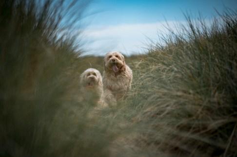 The-Norfolk-Dog-Photographer-0001