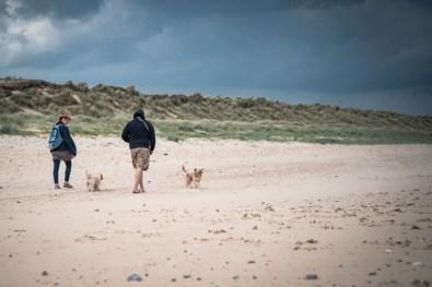 The-Norfolk-Dog-Photographer-0023