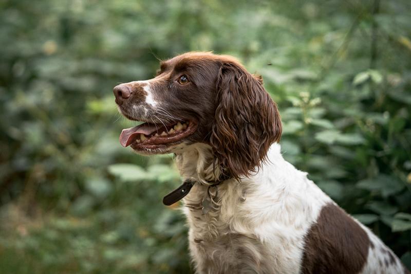 The-Norfolk-Dog-Photographer-0024